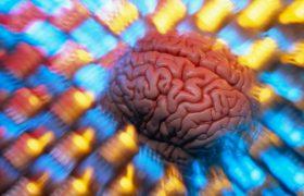 Исследователи открыли более 1000 генов интеллекта, полезных и опасных