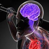 Мозг можно тренировать, как мышцы