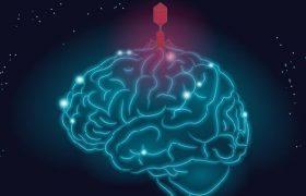 Болезнь Альцгеймера провоцируют вирусы