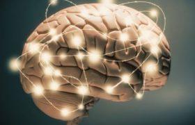 Больше всего калорий сжигает наш мозг