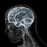 Ученые развеяли миф о безграничных возможностях мозга