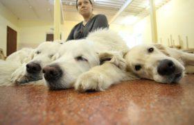 Животные помогают лечить детский аутизм