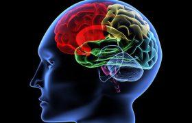 Жирные продукты питания истощают мозг человека