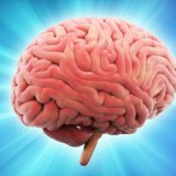 В мозге нашли клетки храбрости