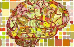 Учёные разобрались, как мозг формирует иллюзии