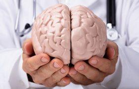 Ученые смогут выращивать мозг в лаборатории для изучения нейродегенеративных заболеваний