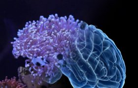 Тропические актинии помогут в бороться с болезнью Альцгеймера