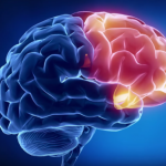 Особая система питания - ключ к сохранению здоровья мозга