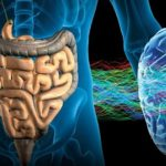 Бактерии из кишечника могут проникать в мозг