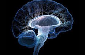 Мозг может предсказывать будущее с помощью времени и ритма
