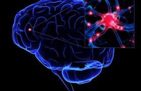 Разработана методика замены повреждённых клеток мозга
