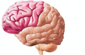 Мозг: левое полушарие может компенсировать повреждения правого полушария