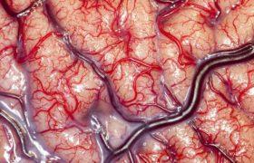 Людям обязательно необходимо беречь свой мозг