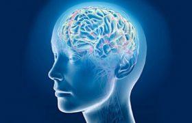 Мозг каждого человека уникален как отпечаток пальца