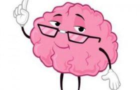 Ум человека почти не зависит от размера мозга