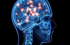 Предложена новая теория работы головного мозга