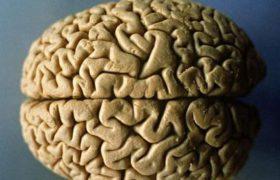 Ученые рассказали о полезном влиянии ягод на мозг
