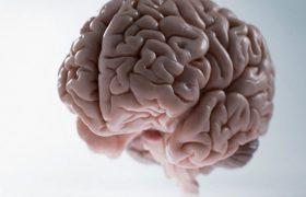 В человеческом головном мозге найден центр вкуса