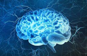 Мозг человека становится взрослым в 30 лет