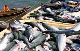 Употребление рыбы замедляет старение мозга