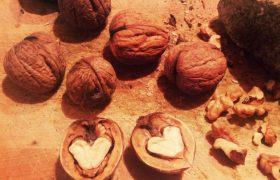 Грецкие орехи способствуют похудению за счет влияния на мозг