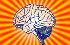 Врачи сообщили о самом полезном продукте для работы мозга