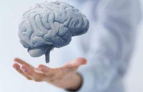 Назван лучший способ остановить старение мозга