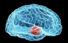 Ученые обратили вспять симптомы болезни Паркинсона у мышей