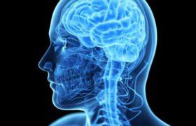 В Подмосковье обнаружен мужчина, у которого отсутствует одно полушарие мозга