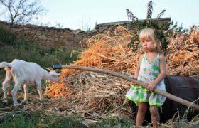 Уровень интеллекта деревенских детей выше, чем у городских — исследование