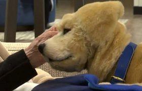 Роботы-щенки утешают пациентов со старческим слабоумием
