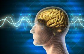 Выяснилось, как работа деформирует мозг