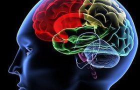 Названы самые доступные супернапитки для мозга