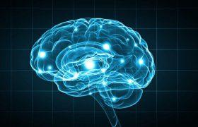 Человеческий мозг обогатят искусственными нейронами