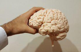 Специалисты назвали методы по улучшению работы мозга в любом возрасте