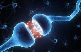 5 способов повысить уровень дофамина в организме