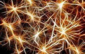 Иммунные клетки восстанавливают мозг, пока мы спим