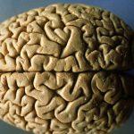 4 вещества в нашем рационе, которые защищают мозг от возрастных нарушений