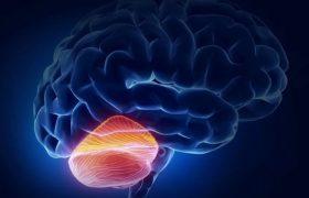 Алкоголь и курение способствуют ускоренной атрофии мозжечка после 50 лет