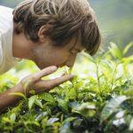 Ученые доказали, что запахи формируют наши воспоминания