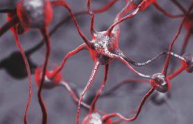 Решена загадка зарождения сознания в мозге