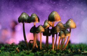 Перезагрузка мозга при помощи псилосцибина: ученые хотят использовать грибы для лечения депрессии