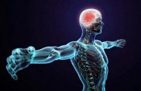 Большой мозг не означает более крепкую память