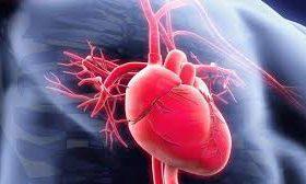 Укрепление сосудов: 5 натуральных средств при атеросклерозе