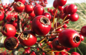 10 рецептов растительных сборов против атеросклероза