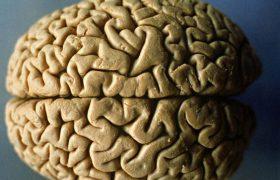 Сохранить здоровье мозга помогают продукты с витамином B12