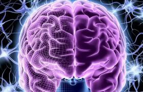 5 продуктов для улучшения работы мозга