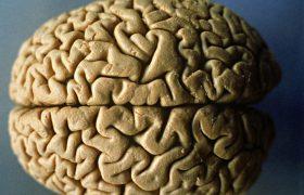 Простые продукты, помогающие сохранить мозг энергичным и здоровым