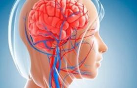 Названы простые способы улучшить кровоснабжение мозга