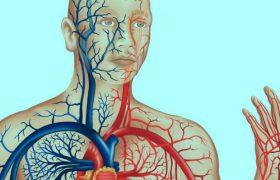Очищение сосудов головного мозга в домашних условиях: лучшие способы и советы